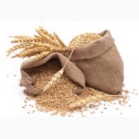 Закупаем жито и другие культуры