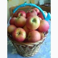 Продам яблоки с своего Сада
