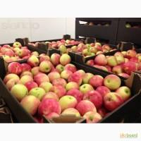 Продам яблоко Польское со склада Импортера