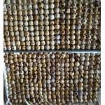 Яйца инкубационные перепела Фараон селекция Испанская