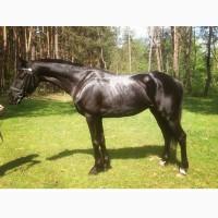 Продам коня(мерин), лошадь