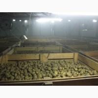 Камера хранения картофеля