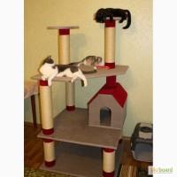 Игровой комплекс для кошек «Мариса» (делаем сами)