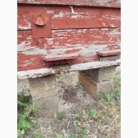Продам пчелосемьи недорого