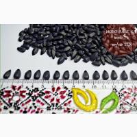 Семена подсолнечника Ново-Алье, устойчив к гербициду Евро-Лайтинг (BASF)