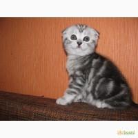 Мраморные котята