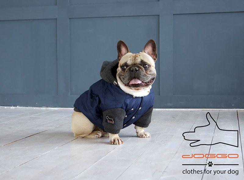 Фото 13. Одежда для собак – Куртка-бомбер. TM DOGGO Весна – 2018