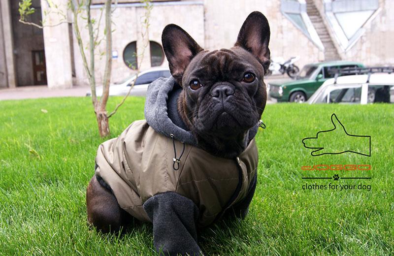 Фото 17. Одежда для собак – Куртка-бомбер. TM DOGGO Весна – 2018