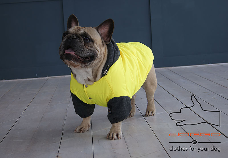 Фото 4. Одежда для собак – Куртка-бомбер. TM DOGGO Весна – 2018
