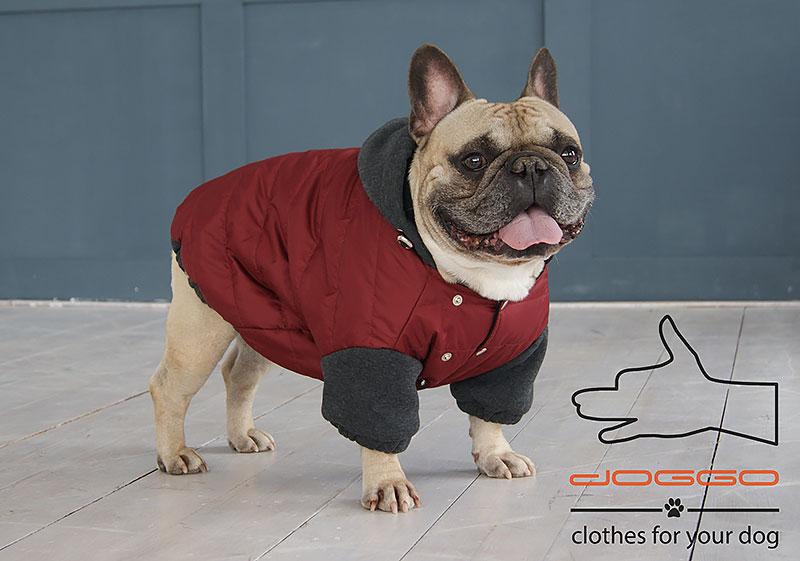 Фото 5. Одежда для собак – Куртка-бомбер. TM DOGGO Весна – 2018