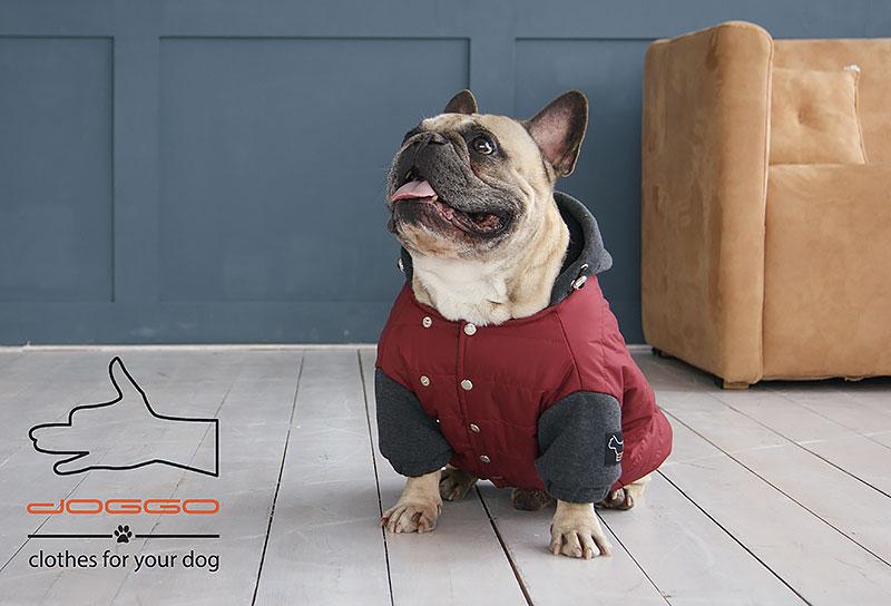 Фото 7. Одежда для собак – Куртка-бомбер. TM DOGGO Весна – 2018