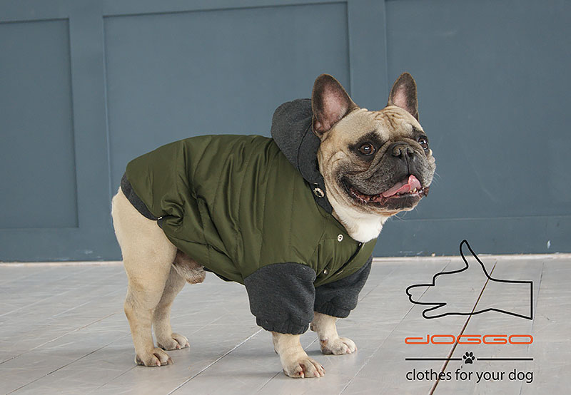 Фото 9. Одежда для собак – Куртка-бомбер. TM DOGGO Весна – 2018