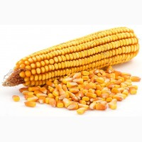 Закупаем кукурузу (крупные партии)