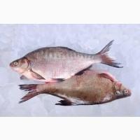 Свежая рыба оптом. Речная свежая рыба