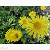 Продам многолетние цветы для сада, дешево