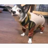 Комбинезон для собаки из флиса