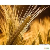 Закупаем ячмень, пшеницу,кукурузу, подсолнечник,сою, просо, горчицу, рапс, лён, горох.