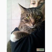 Камышовый кот Кузя