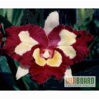 Орхидеи разных видов