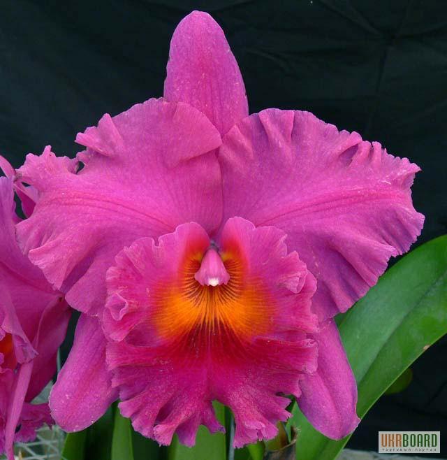 Кактусы суккуленты их цветки  это не цветы и комнатные