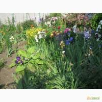 Продам ДЕШЕВО рослини і квіти
