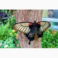 Тропические Живые Бабочки изАфрики