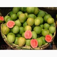 Продам саженцы Гуаява (комнатное растение) и много других растений (опт от 1000 грн)