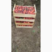 Продам персики с собственных садов.Цена договорная, Одеська обл