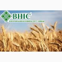 Насіння пшениці озимої, ячмінь озимий