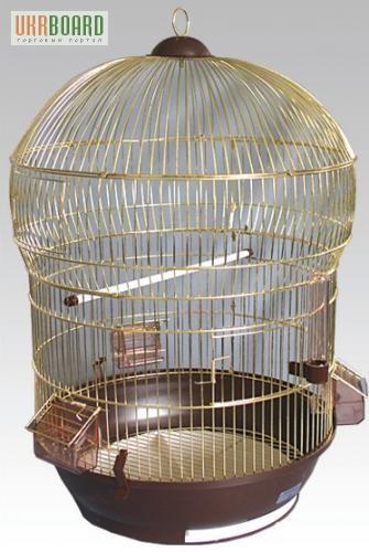 Купить птицееда санкт петербург