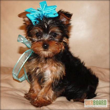 Dog Adoption Northwest Arkansas
