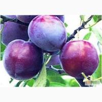 Саженцы плодовых деревьев , кустарников винограда