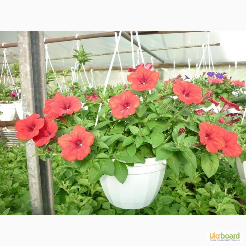 Кто продает рассаду цветов 241