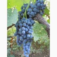 Фирма предлагает виноград на экспорт