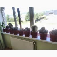 Продам кактуси