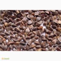 Семена гречки Девятка