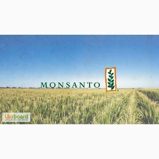 Семена кукурузы Монсанто украинской селекции Райз