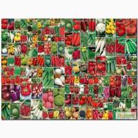 Продам оптом и в розницу сортовые семена овощей, зелени и бахчевых