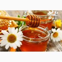 Куплю мед в Херсонской обл. С ПОДСОЛНУХА