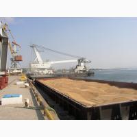 Предлагаем зерновые на экспорт