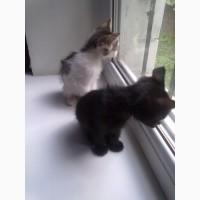 Люди, родные, приютите 2-х брошенных котят(2-2, 5 мес.)
