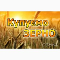 Закупляєм Пшеницю, Сою, Жито, Овес, Горох, Гречку по хороших цінах