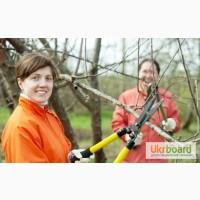 Обрезка всех видов деревьев, услуги садовника