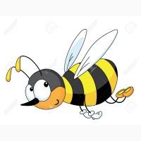 Куплю мед оптом без антибиотика в Кривом Роге ПО 40 ГРН