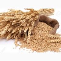 Куплю пшеницу 2, 3 класса дорого. Харьков и область