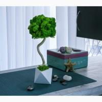 Эко-дерево, топиарий из стабилизированного мха, бонсай