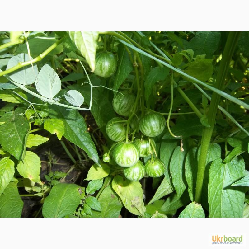 Овощи фрукты нож Нержавеющая сталь Овощи Фрукты Пилерс