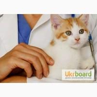 Оптовая ветеринарная аптека, ветеринарные препараты оптом