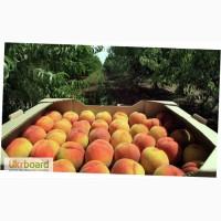 Ящики для персиков