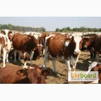 Агрофирма продаст фермерское молоко